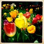 1 tulip patrol 2 3/27