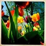2 tulip patrol 2 3/27