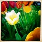 4 tulip patrol 2 3/27