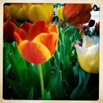 5 tulip patrol 2 3/27
