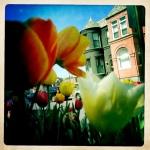 6 tulip patrol 2 3/27