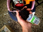 For plastic seed starter containers, gently pinch the bottom to release the plant.