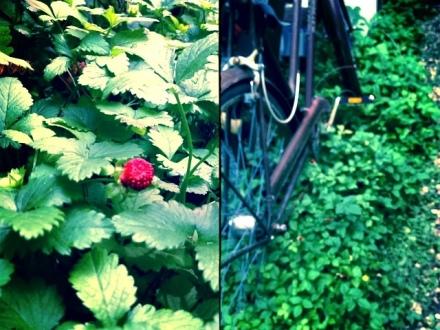 This bike lives permanently along our back stairs, wild strawberries grow in thicker each year