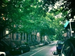 """Tree-lined"" defines Park Slope streets"