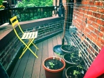 Balcony scene: Potted tomatoes and herb boxes over the rail