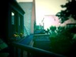 Marigold love with neighbors