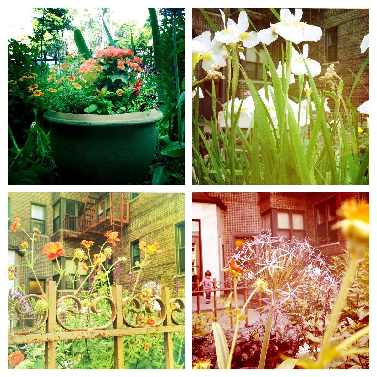 Incredible front garden along a Windsor Terrace apartment building